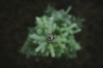Baumspitze - fotokunst von Max Saeling