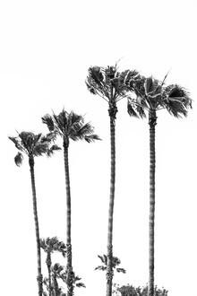 Melanie Viola, Palmenidylle in schwarzweiß (Vereinigte Staaten, Nordamerika)