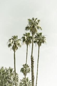Melanie Viola, Palmen am Strand | Vintage (Vereinigte Staaten, Nordamerika)
