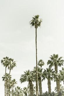 Melanie Viola, Palmen im Sommer  | Vintage (Vereinigte Staaten, Nordamerika)