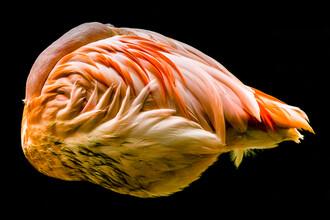 Ulrich Wolf, sleeping Flamingo (Deutschland, Europa)