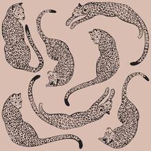 Genna Campton, Pink Leopard Love (Australia, Oceania)