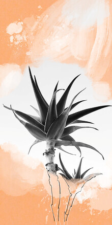 Sabine Israel, Cactus (Griechenland, Europa)