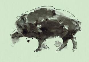 Sabine Israel, Wild Boar (Germany, Europe)