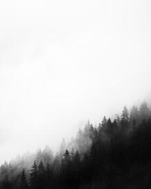 Thomas Kleinert, Misty Woods (Austria, Europe)