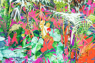 Uma Gokhale, Find Me Where The Tropical Things Are (India, Asia)