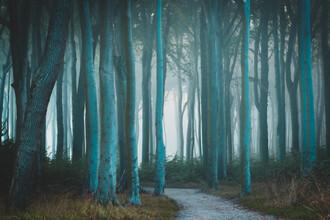 Martin Wasilewski, Foggy Forest (Germany, Europe)