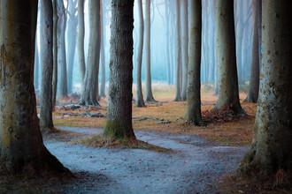 Martin Wasilewski, Gerahmter Wald (Deutschland, Europa)