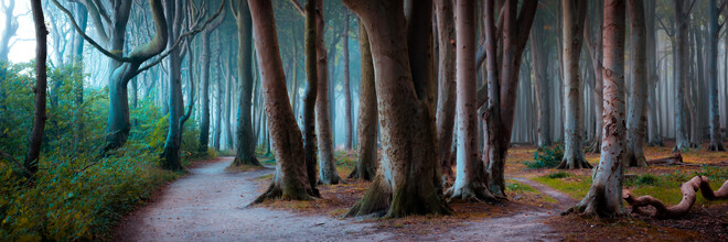 Martin Wasilewski, Coastal Forest Panorama (Germany, Europe)