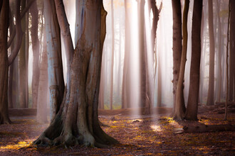 Martin Wasilewski, Light in the Forest (Germany, Europe)