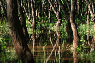 AJ Schokora, Swampy Reflections (China, Asia)