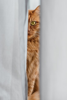 AJ Schokora, Cat Eye (China, Asia)