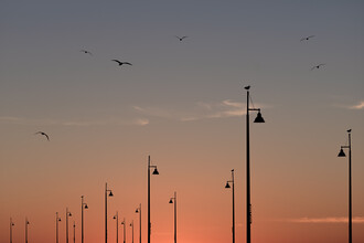 AJ Schokora, Birds on the Pier (Vereinigte Staaten, Nordamerika)
