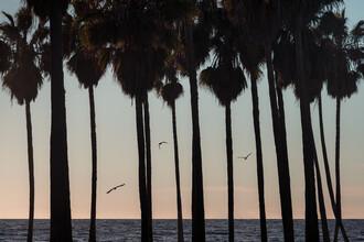 AJ Schokora, Palm Tree Sunset (Vereinigte Staaten, Nordamerika)
