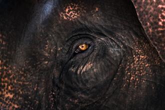 AJ Schokora, Elephant Eye (Thailand, Asia)