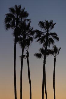 AJ Schokora, Beach Palms (United States, North America)