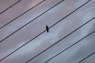 AJ Schokora, Bird on a Wire (Taiwan, Asia)