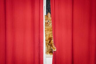 AJ Schokora, Cat Curtains (China, Asia)