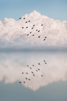 AJ Schokora, Reflection Flock (Turkey, Europe)
