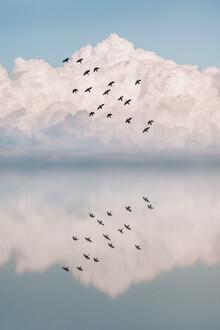 AJ Schokora, Reflection Flock (Turkey, Europe)