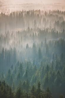 AJ Schokora, Oregon Forest Fog (United States, North America)