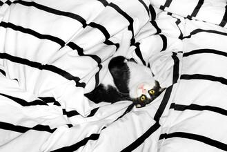 AJ Schokora, Cat Boy (China, Asia)