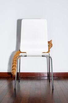 AJ Schokora, Chair Cat (China, Asia)