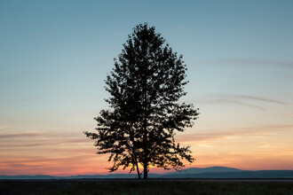 AJ Schokora, The First Tree in Poland (Polen, Europa)