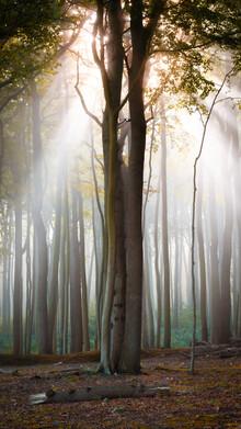 Martin Wasilewski, Herbststimmung im Wald (Deutschland, Europa)