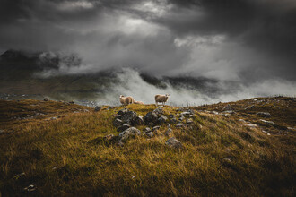 Eva Stadler, Sheep in foggy weather on the Faroe Islands (Faroe Islands, Europe)