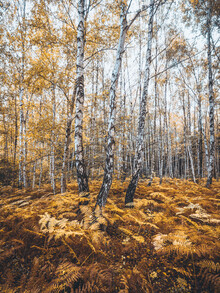 Holger Nimtz, Herbstwald (Deutschland, Europa)