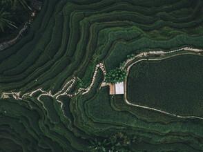 Leander Nardin, green rice terrace on bali (Indonesia, Asia)
