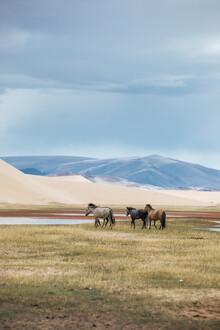 Leander Nardin, przewalksi horses in mongolia (Mongolei, Asien)