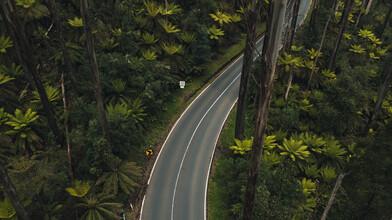 Leander Nardin, road in rainforest (Australia, Oceania)