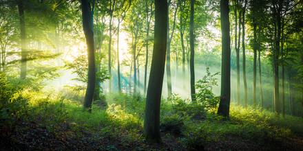 Martin Wasilewski, Tanzende Bäume (Deutschland, Europa)