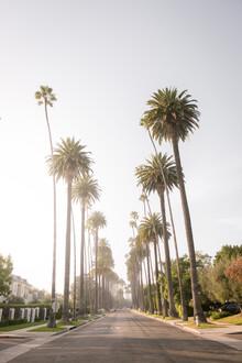 Roman Becker, Palm Alley, Los Angeles (Vereinigte Staaten, Nordamerika)
