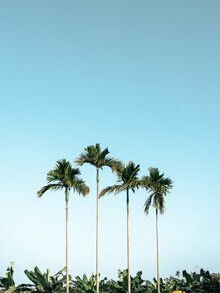 Claas Liegmann, Palmen in Vietnam (Vietnam, Asien)