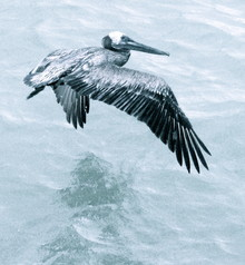 Linda Steinhoff, Big bird (Bahamas, Lateinamerika und die Karibik)