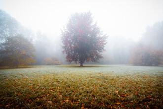 Martin Wasilewski, Baum im Nebeltraum (Deutschland, Europa)