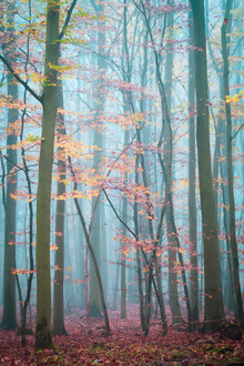 Martin Wasilewski, Forest in the Harz Mountains (Germany, Europe)