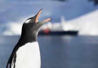 Jens Rosbach, Pinguin mit Schiff (Antarktis, Europa)