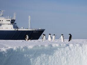 Jens Rosbach, Adéliepinguine mit Schiff (Antarktis, Europa)