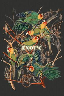 Jonas Loose, Exotic (Germany, Europe)