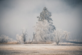 Franz Sussbauer, Raised hide sorrounded by bushes and a fir covered with hoarfrost (Germany, Europe)