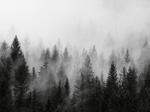 Seven Trees Design, B&W Forest (Germany, Europe)