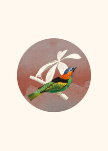 Seven Trees Design, Bird Collage II (Germany, Europe)