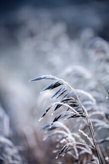Mareike Böhmer, Frosty Morning 5 (Germany, Europe)