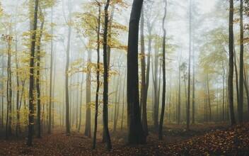 Patrick Monatsberger, Autumn forest (Germany, Europe)