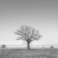 Dennis Wehrmann, Tree of life (Germany, Europe)