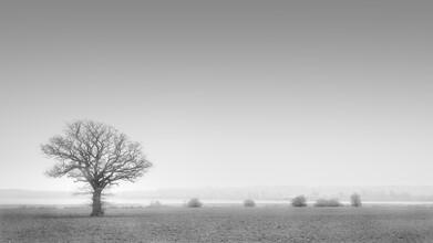Dennis Wehrmann, Tree of live (Germany, Europe)